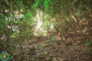 鳥取城跡(久松山)を撮影しました 国指定史跡「史跡鳥取城跡附太閤ヶ平」
