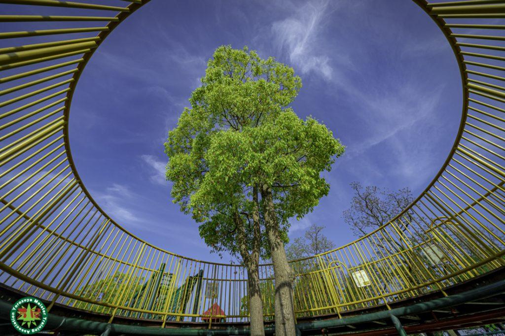 久宝寺緑地は、大阪府八尾市西久宝寺、東大阪市大蓮南、および大阪市平野区加美東にひろがる都市公園